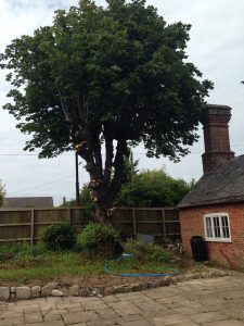 large tree work