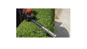 hedge cutting iow
