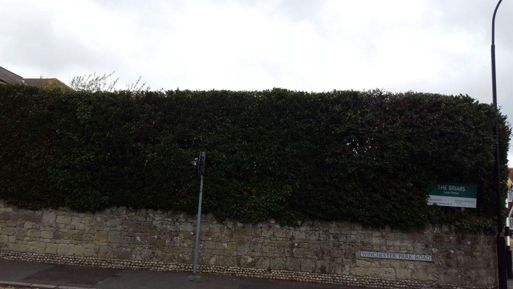 hedge isle of wight
