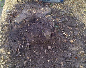 tree stump removal isle of wight