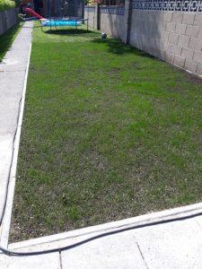 grass seed mix